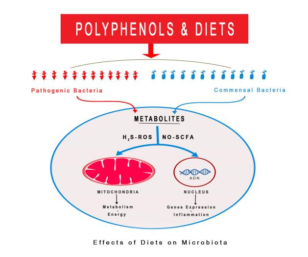 Effects of Diets on Microbiota